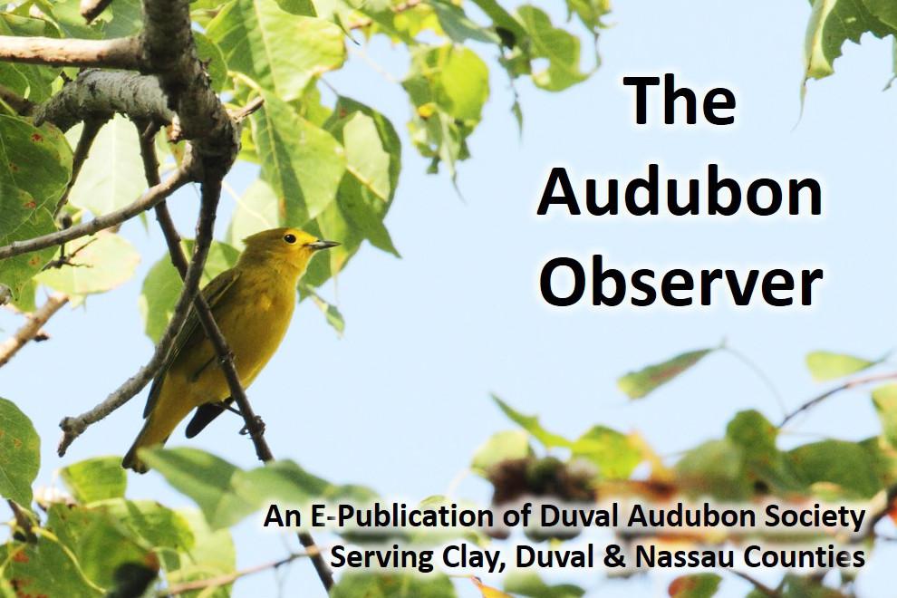 Audubon Observer Banner