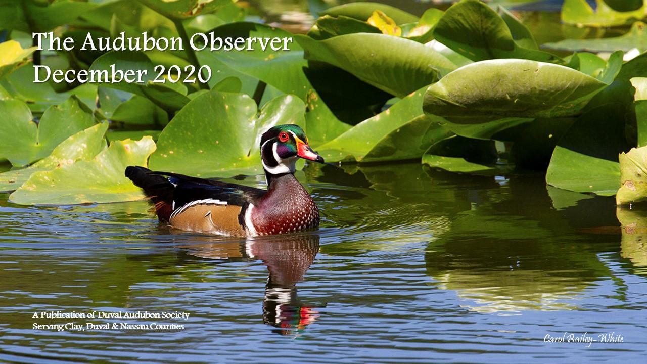 2020 Dec Observer Banner
