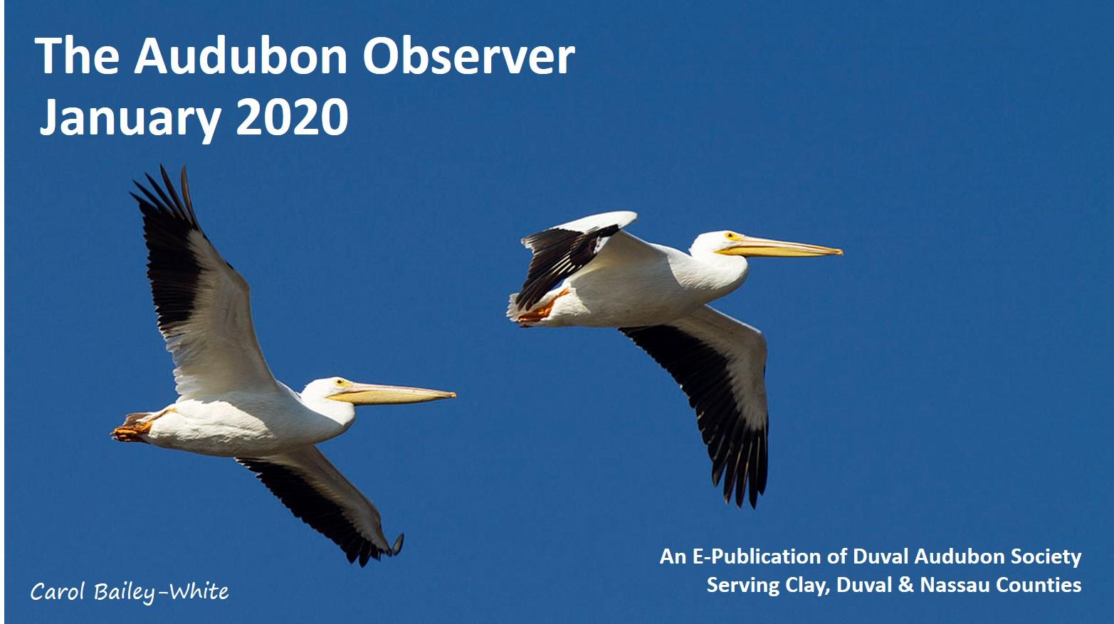 2020 Jan Observer Banner 7DC 7530