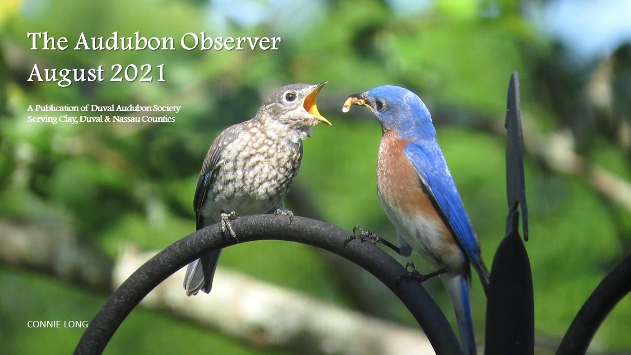 2021 Aug Observer Banner 2