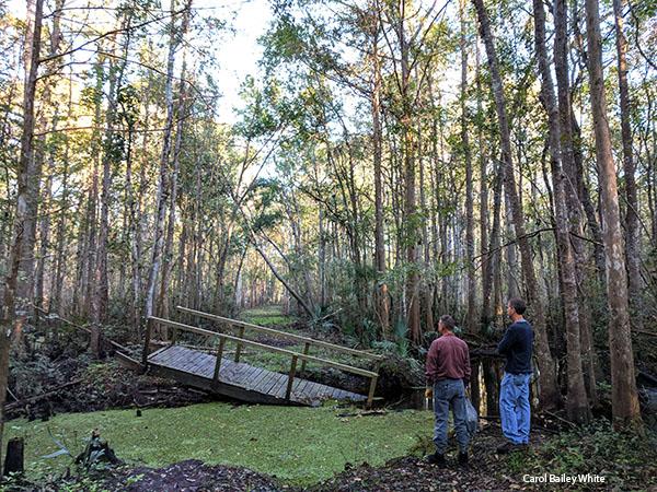 Crosby Bridge rearranged by Irma