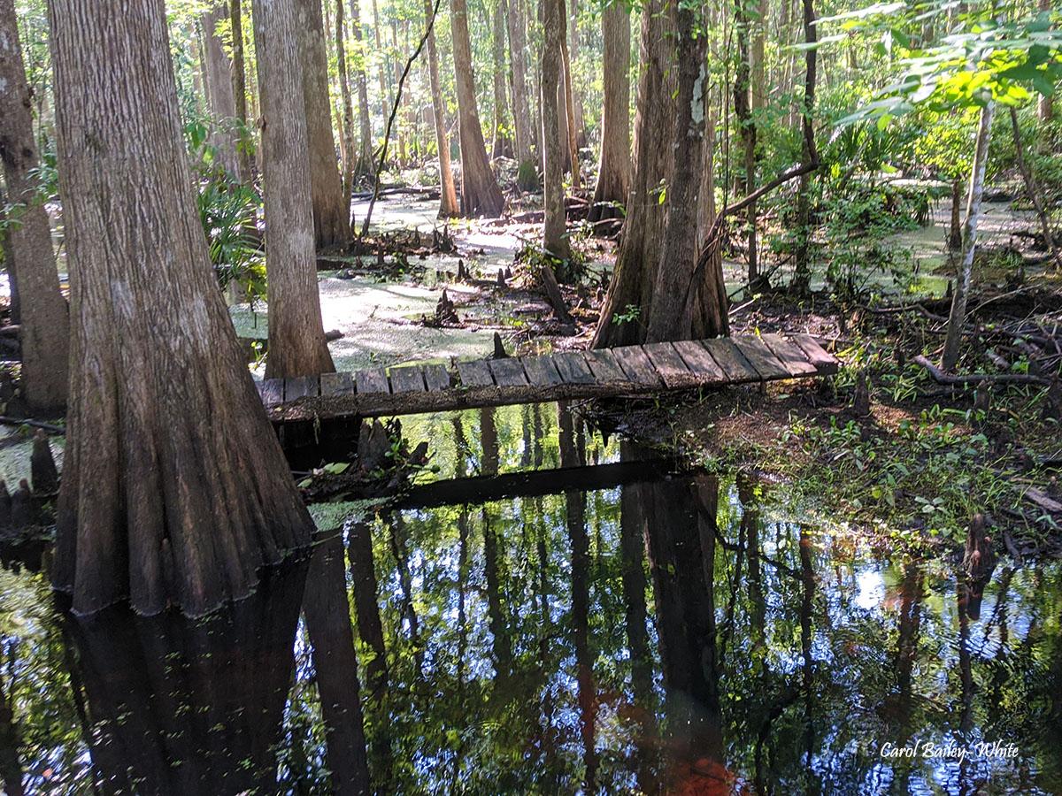 Crosby swamp watermark CBW IMG 20200621 094727