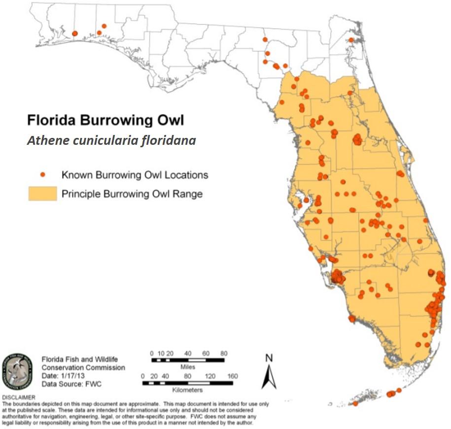 Florida Burrowing Owl distribution map FWC