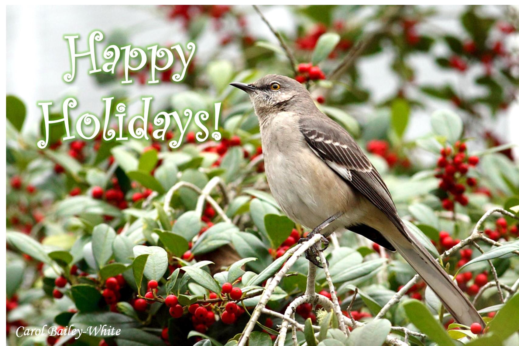 NOMO on Holly Happy Holidays CBW 20121207